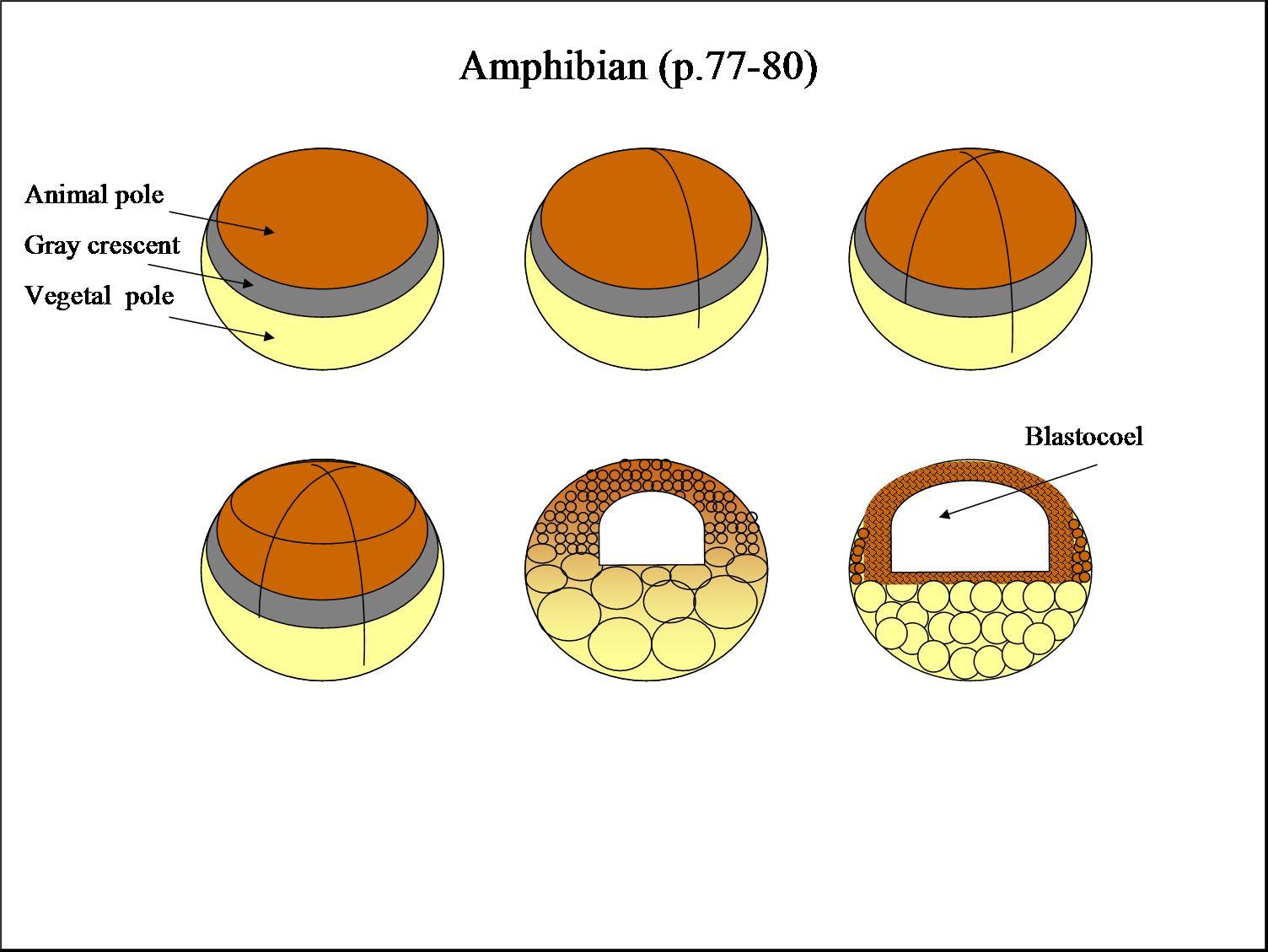 biology 104 spring 2006
